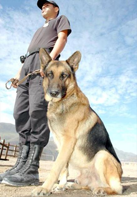 Force Security S.R.L. seguridad canina
