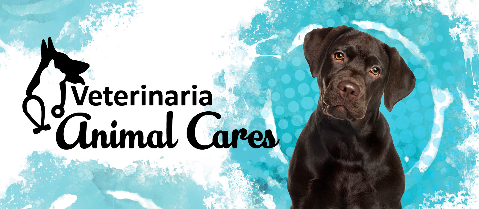 Veterinaria Animal Cares banner
