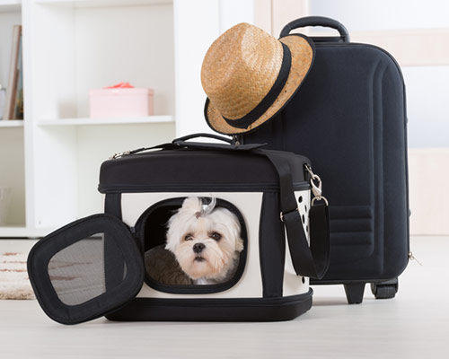 Pet Transport perro